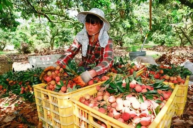 《农村电商发展趋势报告》:农货上行推动中国农村深层次变革